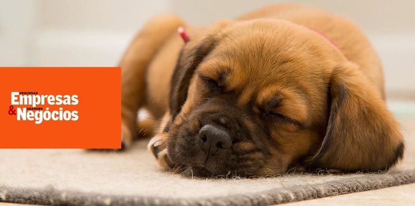 PEGN – Startup brasileira inova com células-tronco para cães e gatos