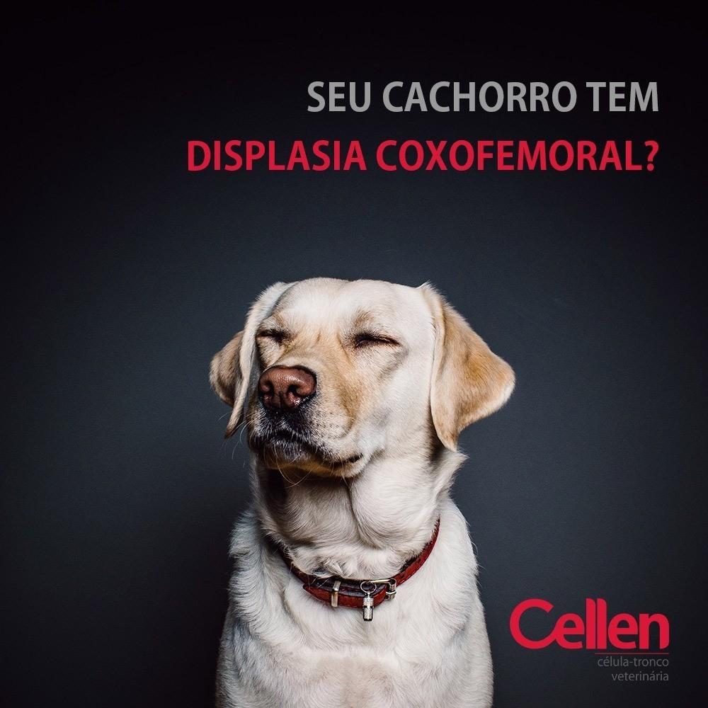Seu cachorro tem Displasia Coxofemural?